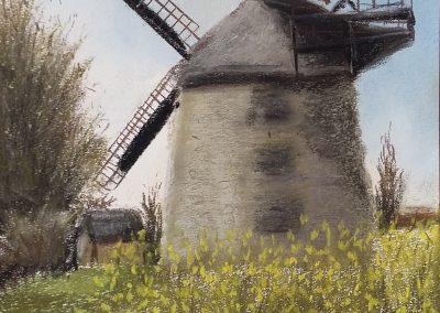 Enger Liesbergmühle in der Rapsblüte