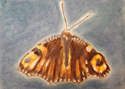 Der Schmetterling mit irisierenden Pastellen überarbeitet
